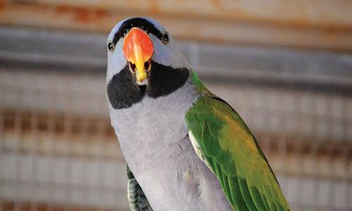 12 Mile Bird Park Tour